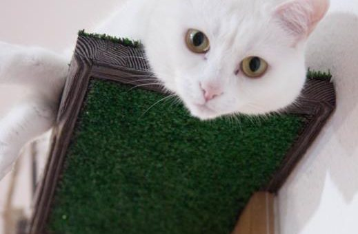 Домик Хоббита для кошек
