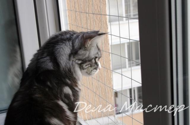 Сетки на окна мейн кун