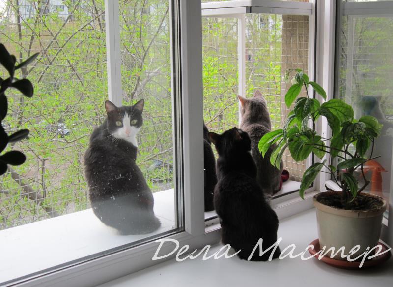 Вольер для кошек