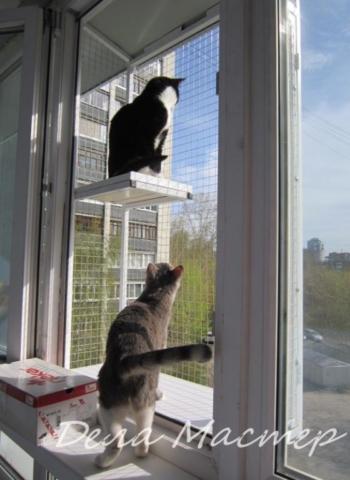Выгул для кошек