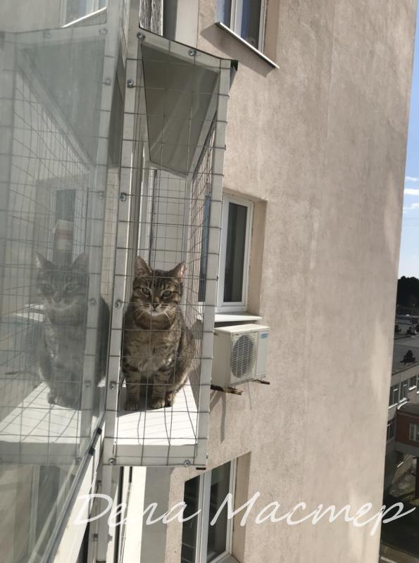 Выгул для кошки (46)
