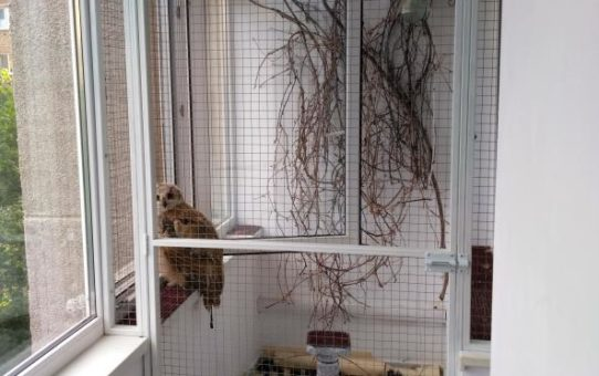 Вольер для совы на балконе (1)